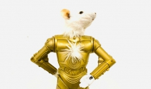 L'homme en or