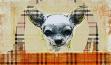 Chihuahua in burberry handbag